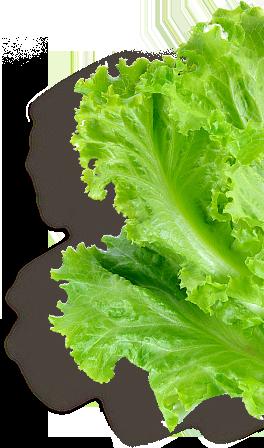 Rau Salad